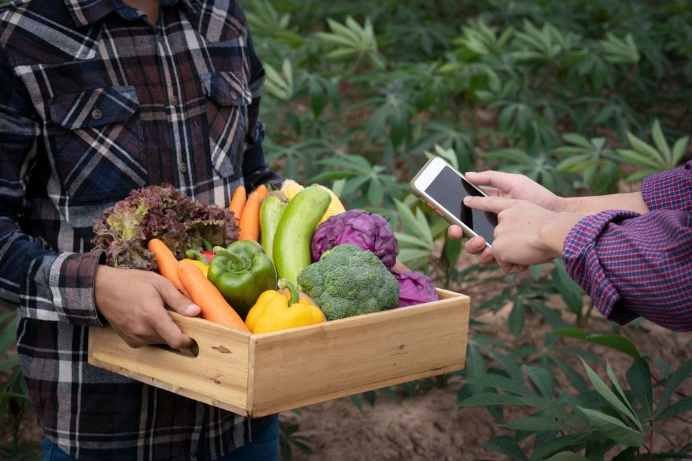 producteur-local-fruits-legumes